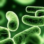 Ebola Vírus Fertőzés