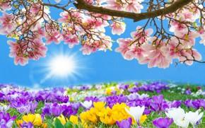 Szép tavaszt, sok napsütést kívánunk!