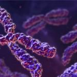 Információk a genetikai tesztekkel kapcsolatban