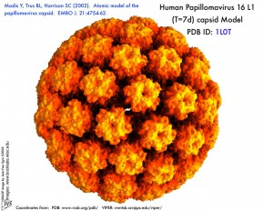 hpv-yellow-orange