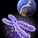 Veracity és DELTA X Gene árak (felnőtt + magzati genetikai vizsgálatok)