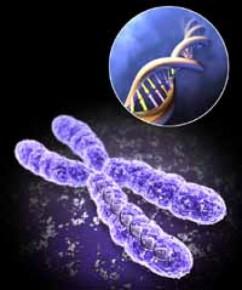 kromoszoma-n-273
