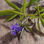 A hormonegyensúly zavarai (Gyógynövények 3. rész)